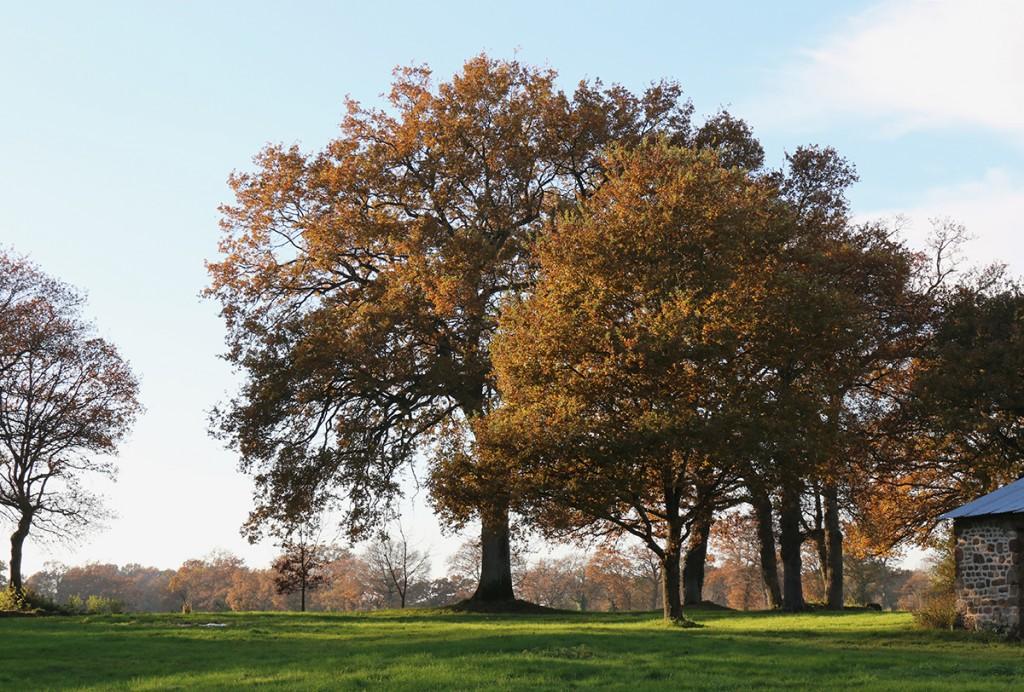 017_arbres