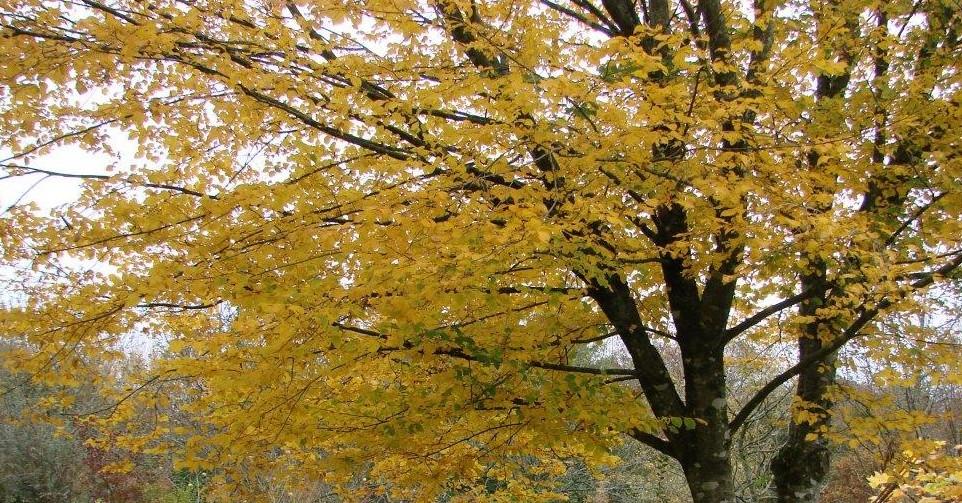 feuillage automne (18)