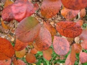 feuillage automne (36)