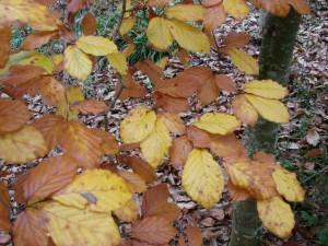 feuillage automne (37)
