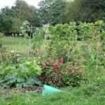 jardin bio images